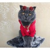 Kedi Kıyafetleri